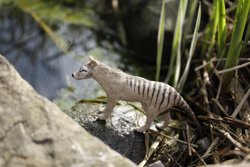 thylac14.jpg