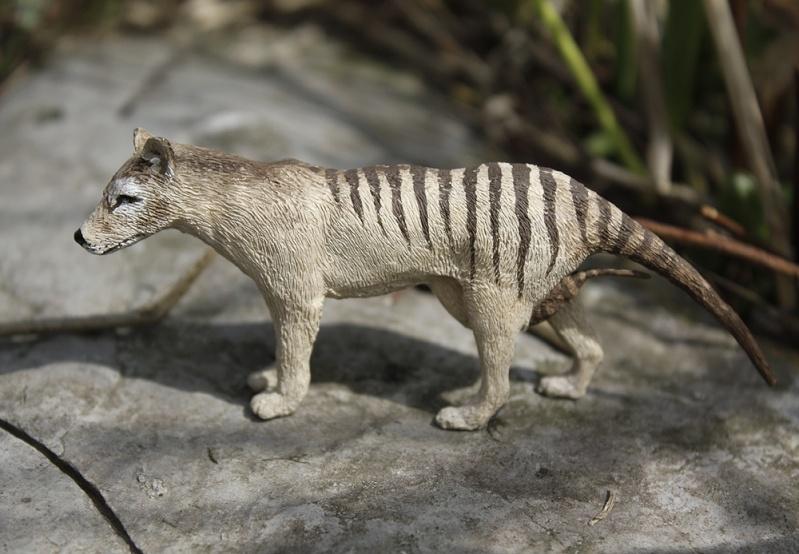 thylac16.jpg