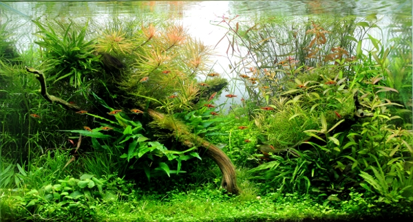landscape of aquateddy aquascaping world forum