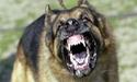 [Cắn Bậy] Chó Dại