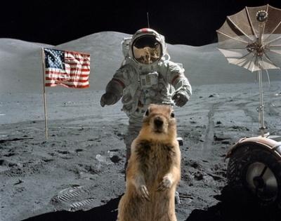 squirr10.jpg