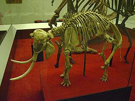 paléontologie mammouth pygmée nain forme naine Paléoloxodon creticus Crêticus mammuthus éléphantidés Proceedings of the Royal Society B forum mai 2012 Victoria Herridge Muséum d'Histoire naturelle de Londres Sicile Malte espèce insulaire