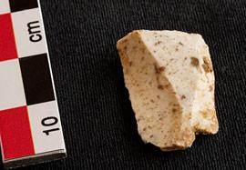 Cryptozoologie - Paléontologie - Changis - seine et marne - découverte d'un mammouth - silex - homme de neandertal - homo sapiens - chasse - novembre 2012 - maxisciences - le parisien - hominidés - Pascal Depaepe - Bruno Foucray - Grégory Bayle - fouilles galloromaines - forum - chasse