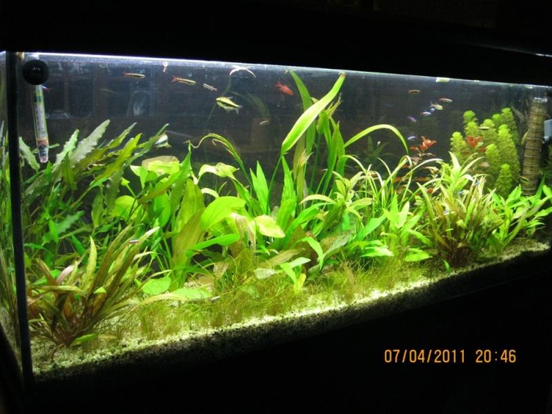Vends aquarium 120l 45 for Aquarium 120 litres