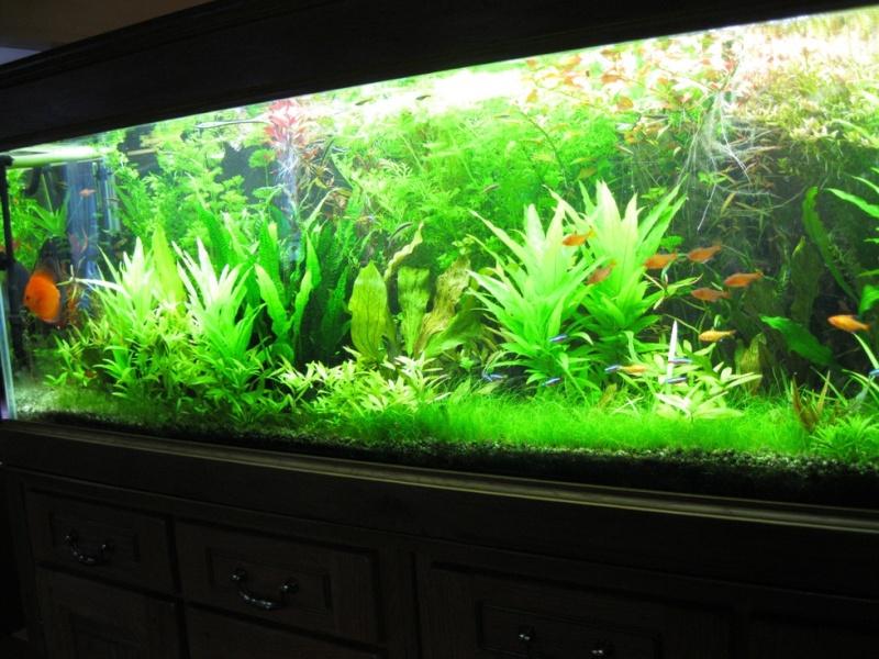 Lancement de mon 500 litres amazonien page 2 for Aquarium 50 litres occasion