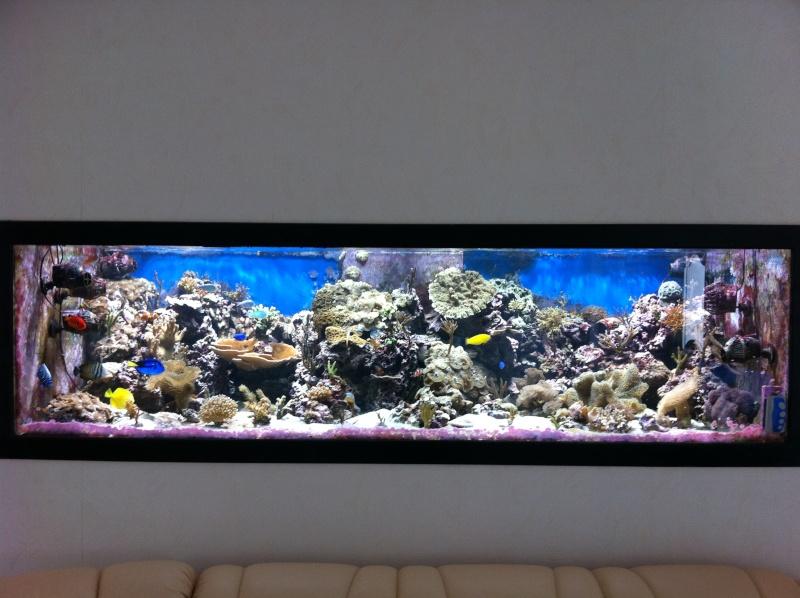 Et Aquarium Encastré Dans Un Mur Donnant Un Décor Plus épuré ...