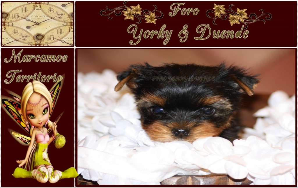 YORKY & DUENDE