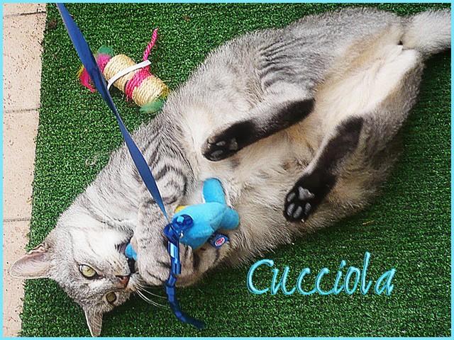 cuccio10
