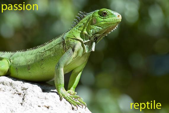 Passion Reptile