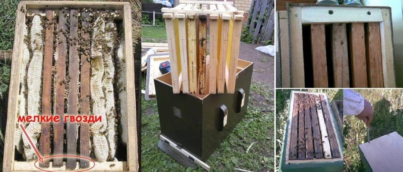 парент: эскиз рамки пчел