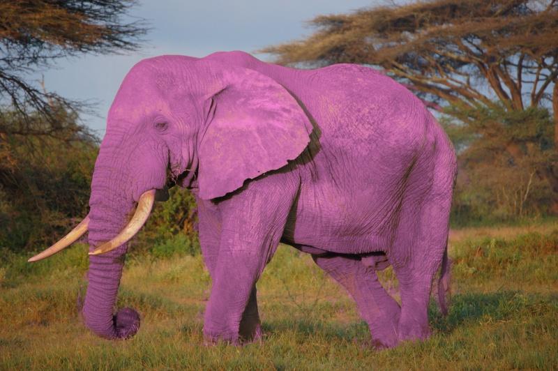 elepha10