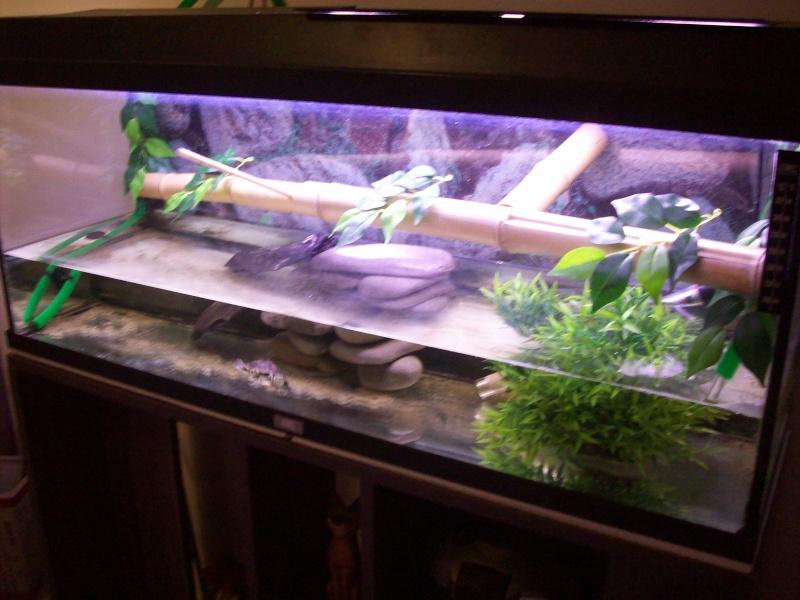 décoration aquarium a tortue
