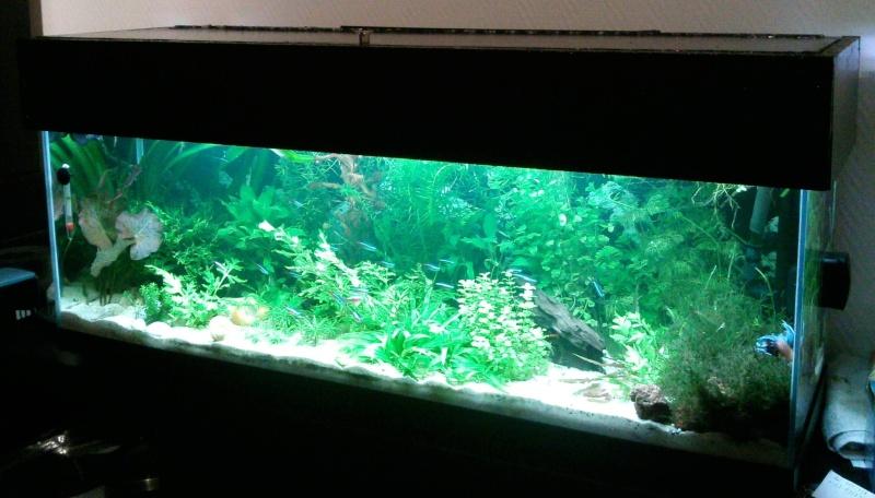 Vend aquarium 120l 57 for Vend aquarium