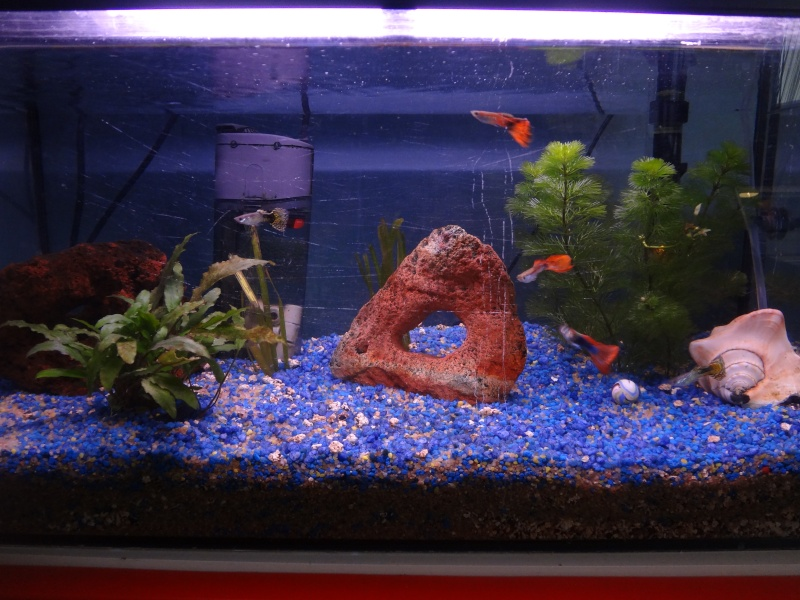 Aquarium 60l avis et aide sont les bienvenus for Poisson aquarium 60l