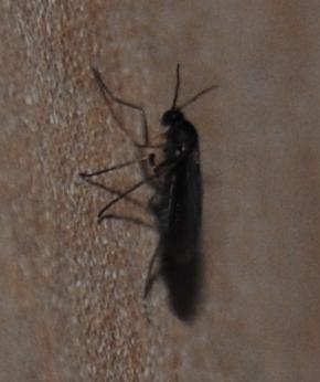 pin insecte volant noir on pinterest black bedroom. Black Bedroom Furniture Sets. Home Design Ideas