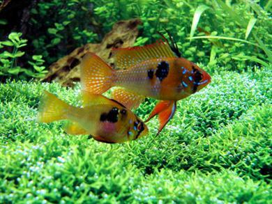 Mon aquarium 120l et mon aquarium 60l page 3 for Poisson aquarium 60l