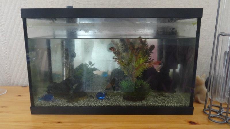 mise en place de mon premier aquarium. Black Bedroom Furniture Sets. Home Design Ideas