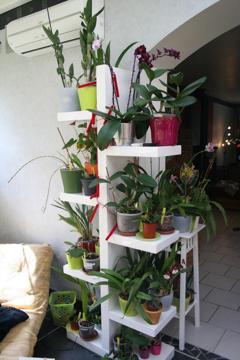 mon jardin d 39 orchid es avec exemple de plante en stress avant et apr s. Black Bedroom Furniture Sets. Home Design Ideas