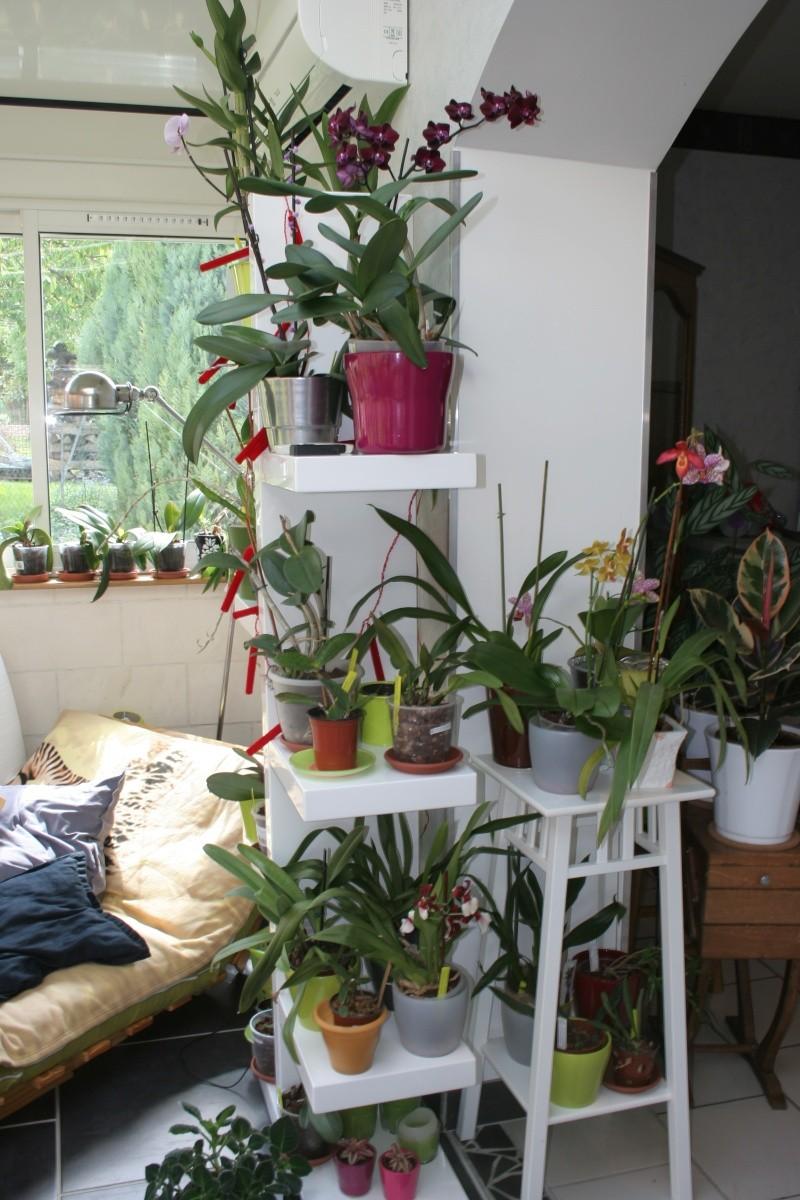 mon jardin d 39 orchid es avec exemple de plante en stress avant et apr s page 5. Black Bedroom Furniture Sets. Home Design Ideas
