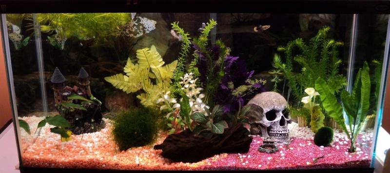 Voici mon aquarium 125 litres