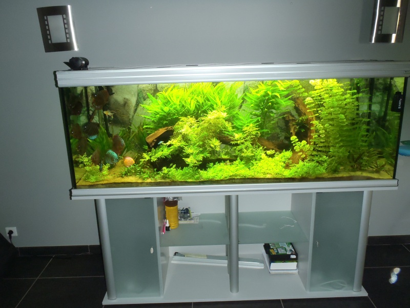 un de mes aquarium 250 l avec mes discus page 2. Black Bedroom Furniture Sets. Home Design Ideas