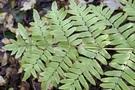 Photos gratuites et libres de droits d'autres plantes (fougères, mousses, algues...)