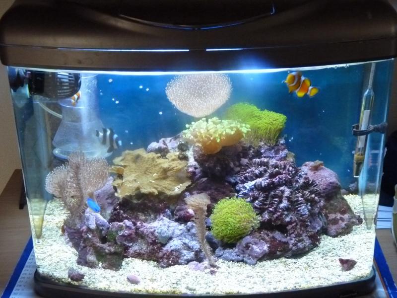 Recifal france mon nano chantal80 pr sentation de for Petit aquarium