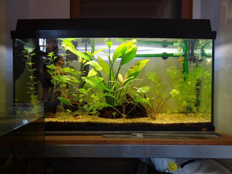 Modification couvercle aquarium for Couvercle pour aquarium