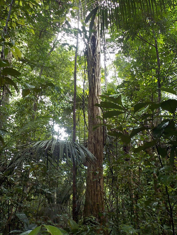arbre_18.jpg